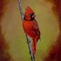 Le cardinal.