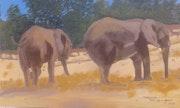 Eléphant à la réserve Africaine de Sigean. Marly