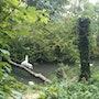 Zoo d'Amiens, les oiseaux. Monica