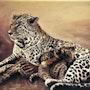 Leopard et ces petits.