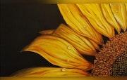 Soleil. Fleur jaune.