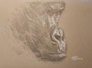 Portrait de singe. Jean Michel Marand