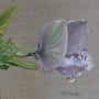 Rosée du Pois de senteur. Patricia De Chadois