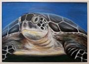 Turtle. Mona Banazadeh
