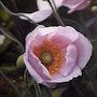 La fleur de l'âge. Frédéric Letrun