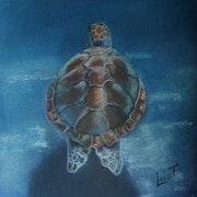 La tortue marine.