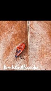 Un insecte à deux pattes.
