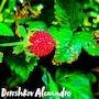 Une fraise des bois. Baloban Nadège
