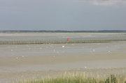 La baie de Somme, le paradis des oiseaux.