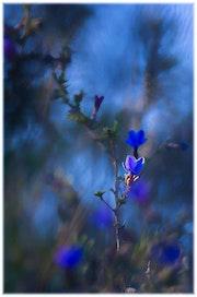 La vie en bleu. Jean-Yves L