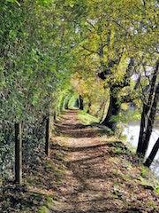 Paisaje en río Miño, Lugo.