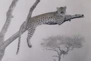 Léopard au repos sur un arbre mort.