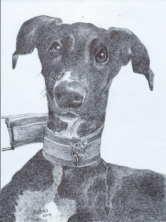 Retrato de mascota. Sebas Sebas