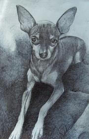 Retrato de mascota.