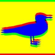 Blue seagull.