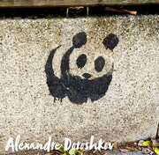 Un panda. Baloban Nadège