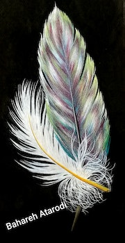 Love feathers.