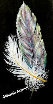 Love feathers. Bahareh Atarodi