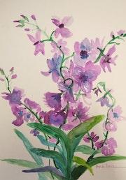 Orquídeas. Ana Dorcu