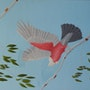 Beautiful Galah. Brian L Art