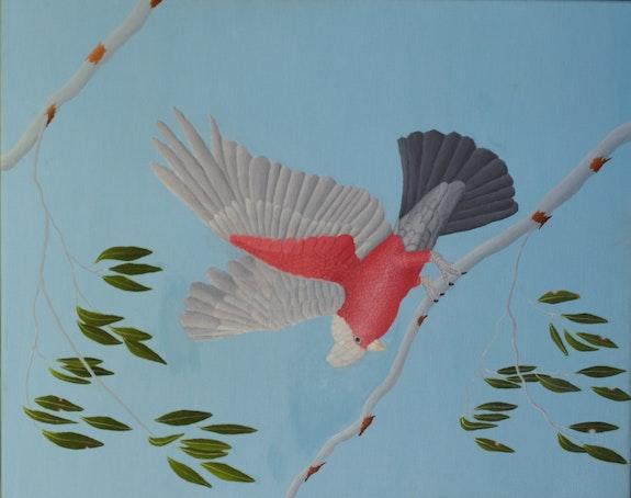 Beautiful Galah. Brian Leverton Brian L Art