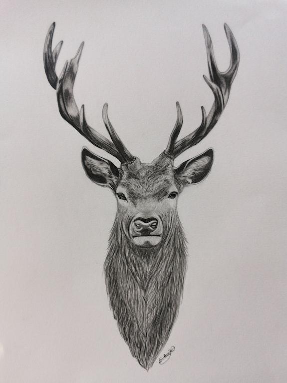 El ciervo. Estefanía Acuña Estefania Acuña Torres