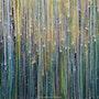 La Forêt aux étoiles 2020-1178. Sarah Leseigneur