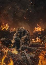 El mundo en llamas.