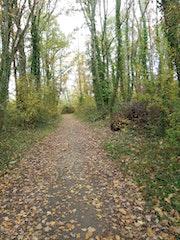 Sous bois a l'automne.