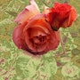 A rose by any other name 2. Cooperman