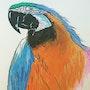 Perroquet. Scali'arts