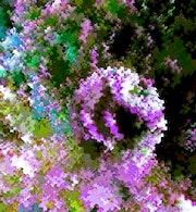 Floraisons. Trans'pho