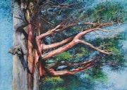 Yew Tree of Korea.