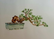 Le bonsai, aquarelle.