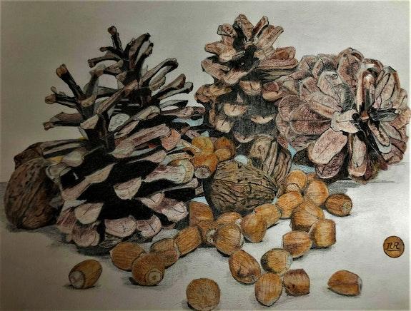 Pommes de pin, noix et noisettes. Πr Dessins Πr Dessins