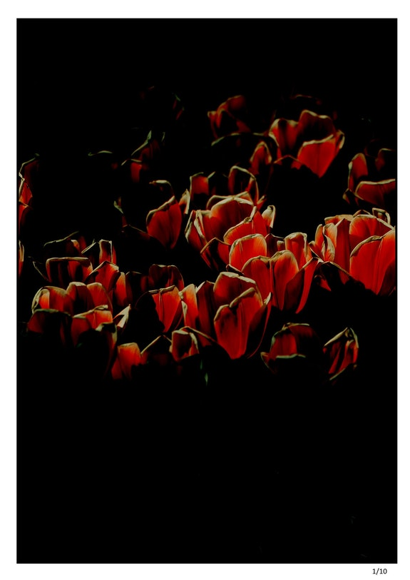 Tulipes Nocturnes. Massoulle Cathy Cathy Massoulle