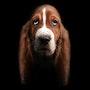 Les longues oreilles. David Strano - Animal Studio®