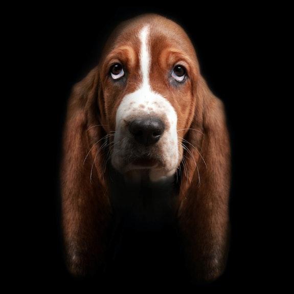 Les longues oreilles. David Strano David Strano - Animal Studio®