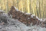 La forêt, complètement givrée! ! !.
