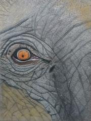 African Elephant Eye. Chrisfineart