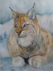 Canadien lynx. Keteriel