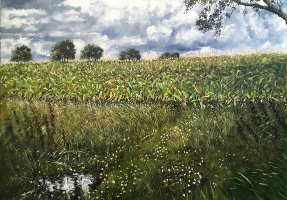 The Maize field Somerset. David Fitch David Fitch