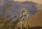 Edelweiss en Himalaya.