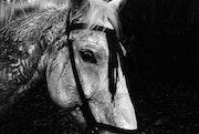 Horse. Chavi García