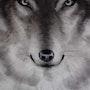 El lobo de ojos blancos. Adel Tapia