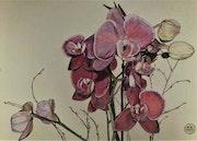 Orchidées. Πr Dessins