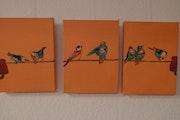 3 petites photos d'oiseaux colorés. Gerlinde Bawendi