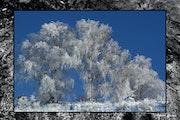 Blancheur du début d'hiver.