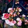 Primavera en Japón. Houmeau