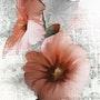 Tige de rose tremiere. Christelle D-Aitsiali